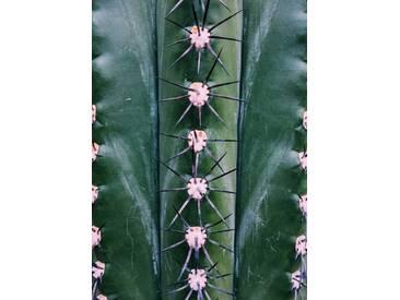 Human Empire Human Empire Artist Series Natural Symmetry Kaktus Poster 50x70 cm