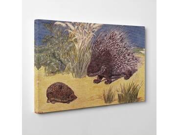 "Leinwandbild ""Vintage Porcupine and Hedgehog von Percy J. Billinghurst, Kunstdruck"