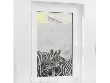 Fensterbild Zebra