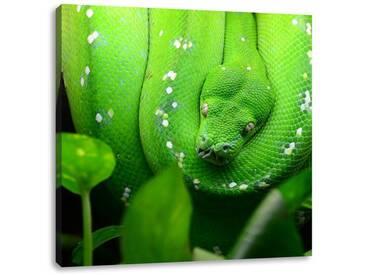 LeinwandbildGrüne elegante Schlange
