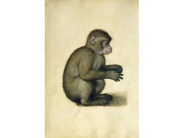 A Monkey by Albrecht Dürer Graphic Art