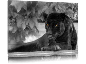 "Leinwandbild ""Schöner schwarzer Panther A von Emmanuel Keller (Tombako the Jaguar), Grafikdruck"