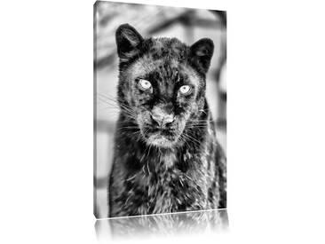 Leinwandbild Prächtiger Panther in Monochrom