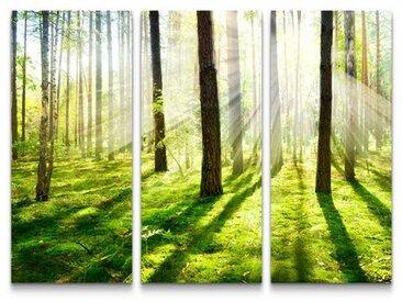 3-tlg.Leinwandbilder-SetSonnenstrahlen im Wald