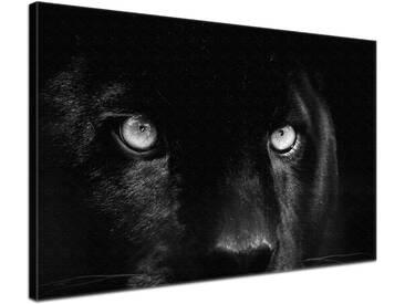 Leinwandbild Panther