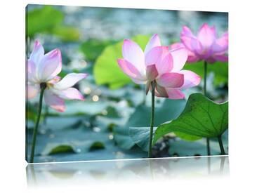 Leinwandbild Asiatische rosafarbene Lotusblüte im Teich
