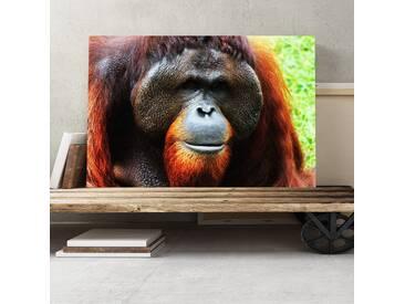 Orangutan Monkey Photographic Print on Canvas