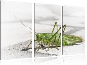 "3-tlg. Leinwandbilder-Set ""Elegante Heuschrecke"", Fotodruck"