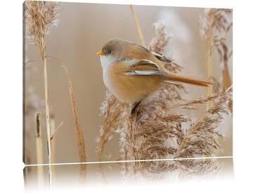 """Leinwandbild """"kleiner Vogel auf Weizen von martha de jong-lantink, Fotodruck"""
