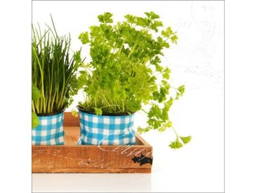 Glasbild Colourful Herbs II, Kunstdruck