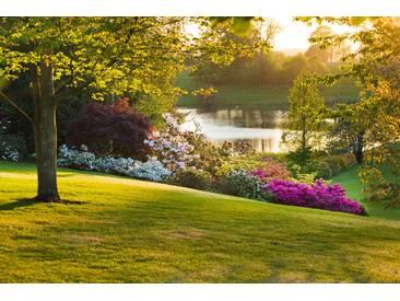 Leinwandbild Dudmaston Estate, Shropshire. The National Trust. May 2012 - Evening View Past Rhododendrons and Azaleas to the Lake, Fotodruck von Clive Nichols