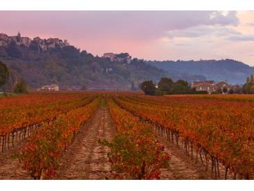Menerbes, Luberon, France: Vineyards In Autumn Below The Village Of Menerbes by Clive Nichols Framed Photographic Print