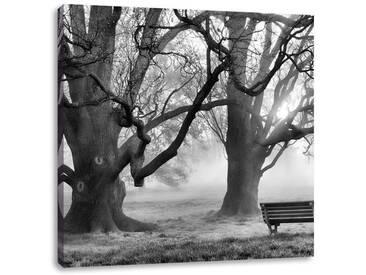 LeinwandbildBaum und Bank im Nebel