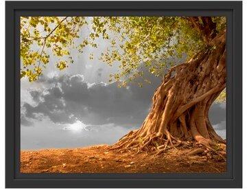 Gerahmtes Wandbild Baum