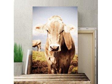 Leinwandbild Kuh im Feld Fotodruck
