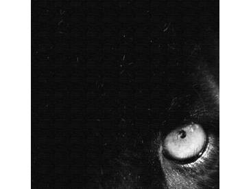 3-tlg. Leinwandbilder-Set Panther