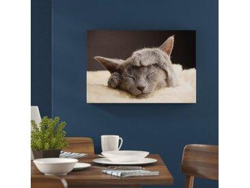 """Leinwandbild """"Katze"""", Fotodruck"""
