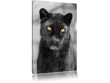 Leinwandbild ,,Prächtiger Panther von Emmanuel Keller (Tombako the Jaguar), Grafikdruck