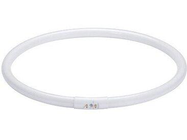 2GX13 Leuchtstofflampe in Ringform