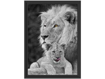 Gerahmtes Galeriekartonbild Löwe kuschelt mit Jungtier