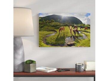 """Leinwandbild """"Pferde auf Wiese"""", Fotodruck"""