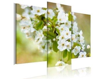 3-tlg. Leinwandbilder-Set Weiße Kirschblüten