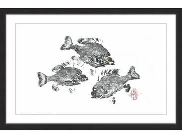 Gerahmtes Papierbild Twirling Sunfish von Andrew Clay