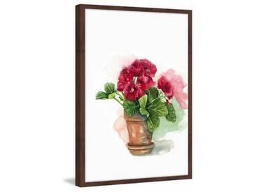 Gerahmtes Papierbild Geranium in Bloom von Glenda Roberson
