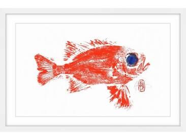 Gerahmtes Papierbild Squirrel Fish von Andrew Clay