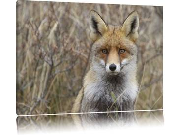 "Leinwandbild ""Aufmerksamer Fuchs im Geäst von martha de jong-lantink, Fotodruck"