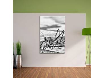 Leinwandbild Elegante Heuschrecke in Monochrom