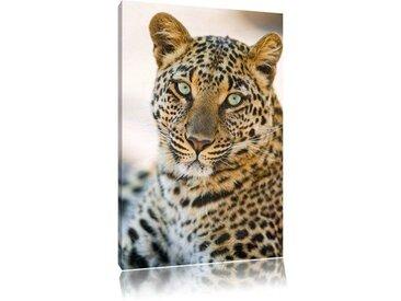 """Leinwandbild """"Schöner Leopard"""", Fotodruck"""