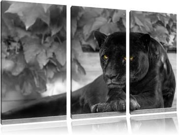 """3-tlg. Leinwandbilder-Set """"Schöner schwarzer Panther"""", Fotodruck"""