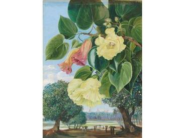 Poster 256. Foliage and Flowers of the Suriya or Portia; the Pagodas of Madura in the distance, Kunstdruck von Marianne North