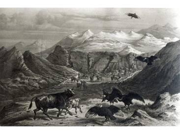 "Leinwandbild Calf being Attacked by the Condors, from ""Historia De Chile Engraved by F. Lehnert von Claudio Gay, Kunstdruck"