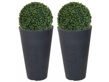 Tischpflanze Buchsbaum in Topf