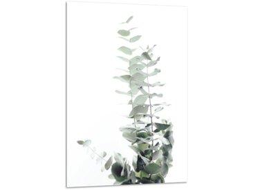 Acrylglasbild Eukalyptus, B:40cm x L:60cm, grau-grün