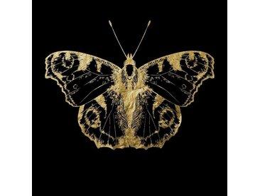 Acryl-Glasbild , schwarz, Acrylglasbild, 100x100cm, »Nachtfalter«, Leonique