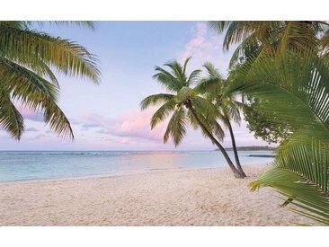 Komar Vlies Fototapete 400/250 cm, bunt, B/H, »Paradise morning«, FSC®-zertifiziert