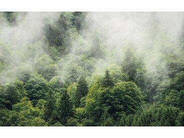 Komar Vlies Fototapete 400/250 cm, grün, B/H, »Forest Land«, FSC®-zertifiziert