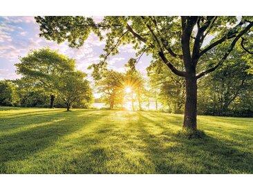 Komar Vlies Fototapete 400/250 cm »Golden moment«, grün, B/H, FSC®-zertifiziert