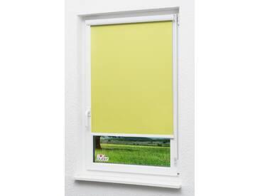 Seitenzugrollo Lysel Outlet - Kassettenrollo abdunkelnd Apfelgrün, (B x H) 110cm x 175cm in grün/apfelgrün