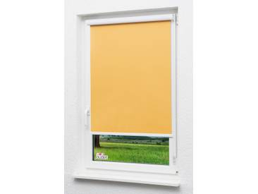 Seitenzugrollo Lysel Outlet - Kassettenrollo abdunkelnd Aprikose, (B x H) 100cm x 175cm in orange/aprikose