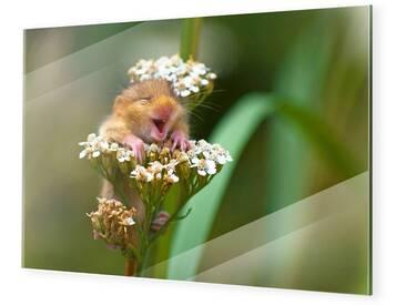 Lachende Haselmaus Bilder Auf Glas Im Format 80 X 60 Cm
