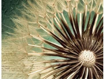 Fototapete Pusteblumen-Poesie (farbig) 336/260 cm