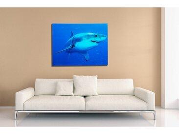 Faszinierendes Bild SHARK 60x80cm Glas Wandbild Weißer Hai Kunstdruck