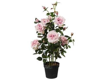 ROSENBUSCH Rose