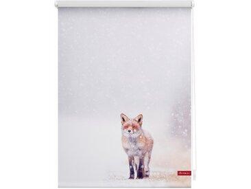 Lichtbick Seitenzugrollo »Klemmfix Motiv Fuchs im Schnee«, H/B 150/90 cm, weiß