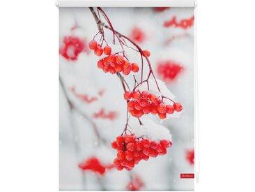 Lichtbick Seitenzugrollo »Klemmfix Motiv Vogelbeeren«, H/B 150/80 cm, rot