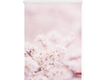 Lichtbick Seitenzugrollo »Klemmfix Motiv Kirschblüten«, H/B 150/120 cm, rosa